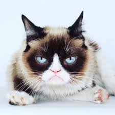 grumpy cat from viral video fame